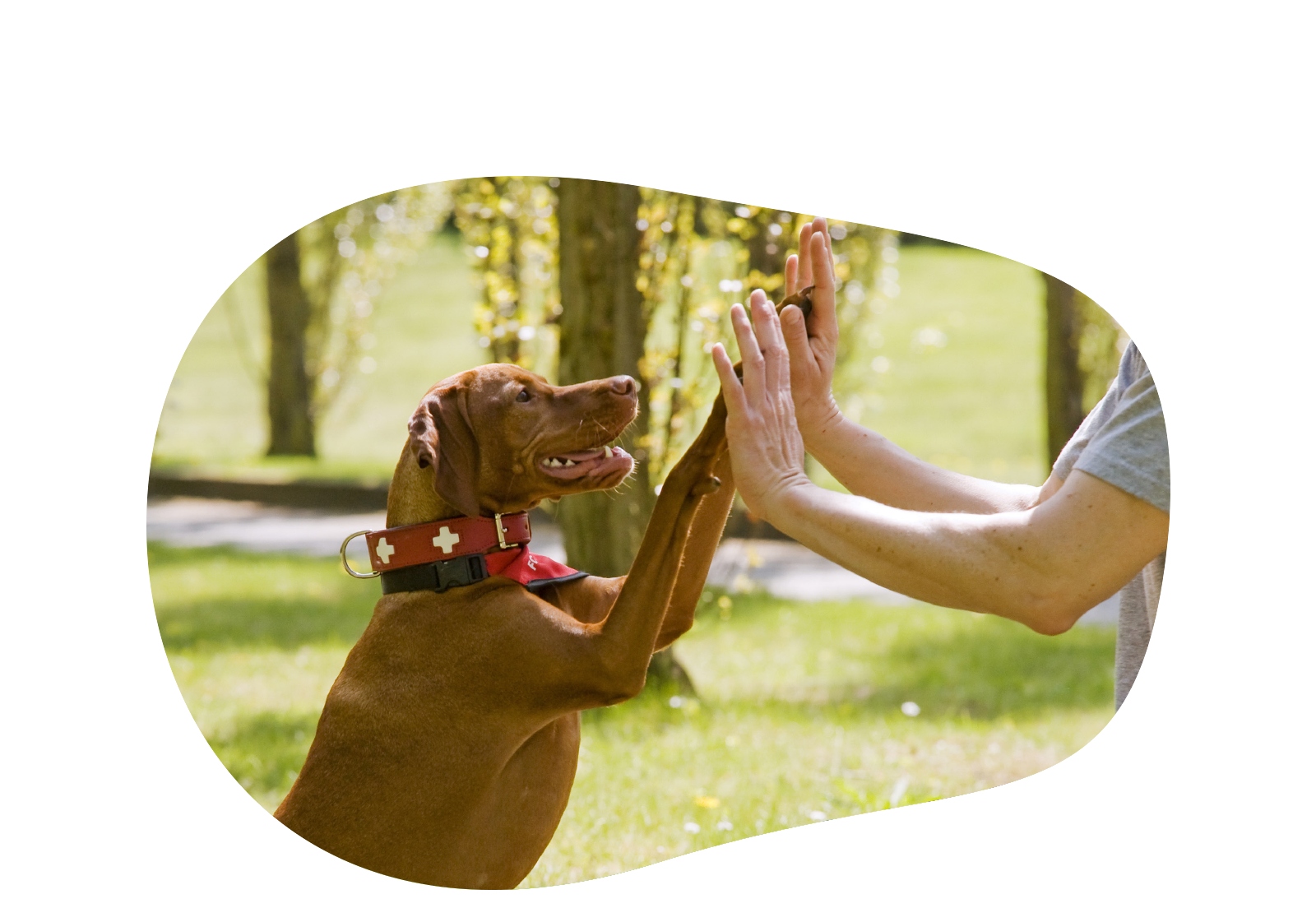 Beziehungsfelle - Hundeverhaltenstherapie Berlin
